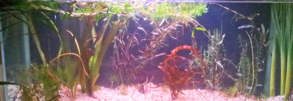 fishtank2-morgan-slideshow-960×330
